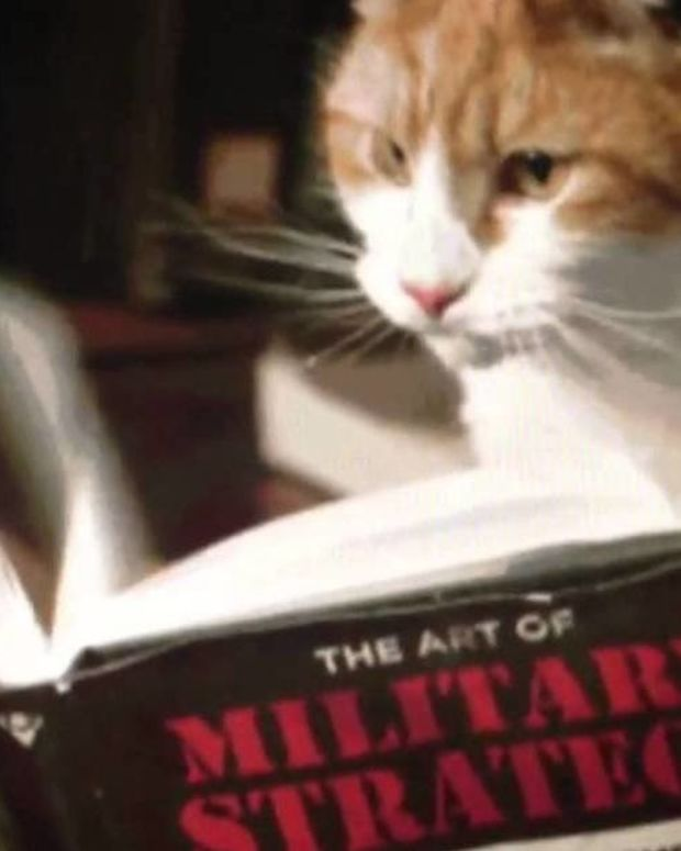 'Acoustic Kitty': U.S. Used Cat As Cold War Spy Promo Image