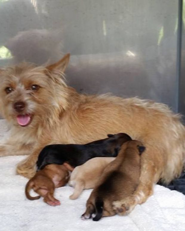 Mother dog and four puppies
