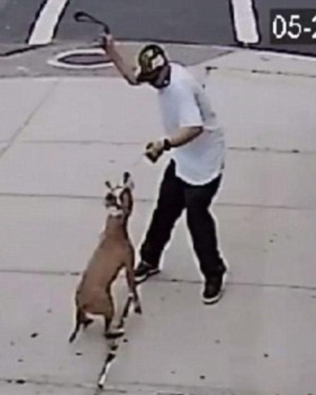 Man Caught Beating Dog On Camera (Video) Promo Image