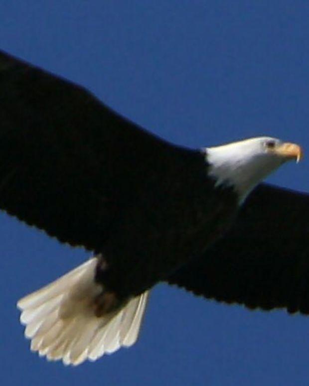 Man Crawls Through Thick Mud To Save Eagle (Photos) Promo Image