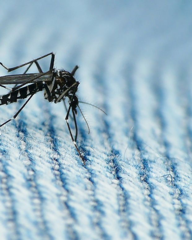 Study: Late-Pregnancy Zika Virus May Not Cause Defects Promo Image