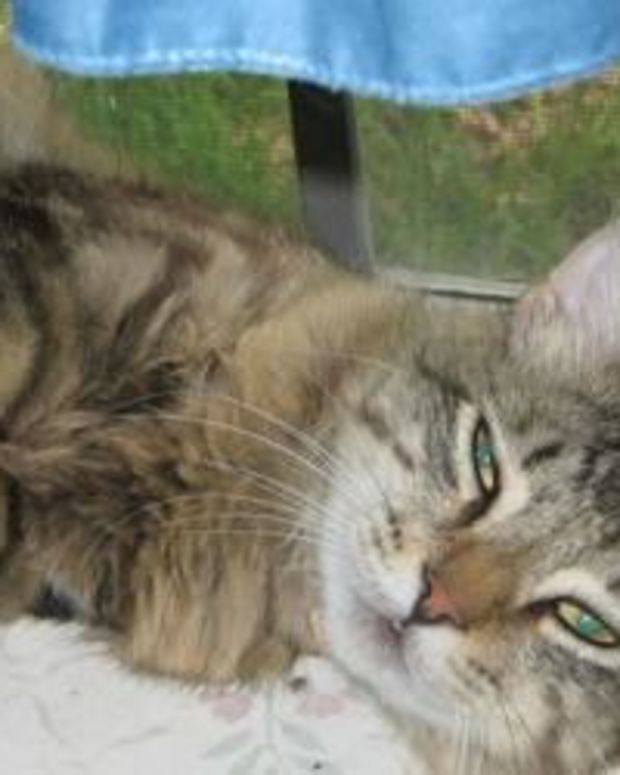 Cat Escapes 20 Minutes After Being Dropped Off At Shelter, Goes To Surprising Place Promo Image