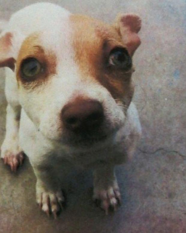 Dog Tests Positive For Meth, Heroin Promo Image