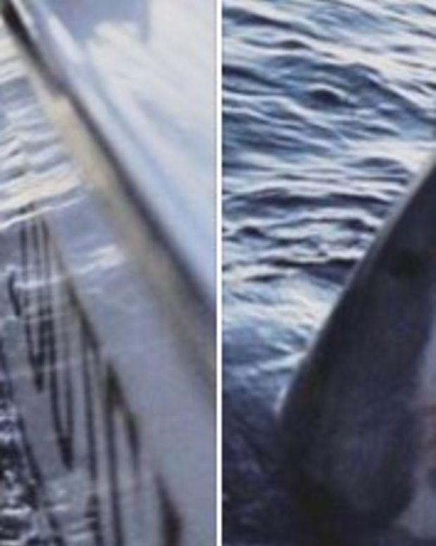 Giant Great White Shark Caught Off S.C. Coast (Photos) Promo Image