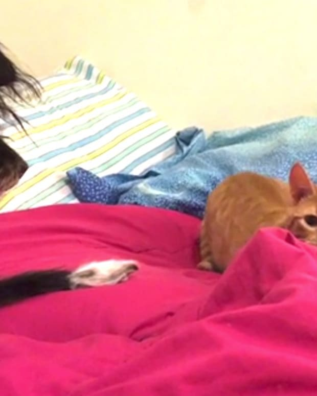 Loyal Dog Stops Devious Cat From Attacking Owner (Video) Promo Image