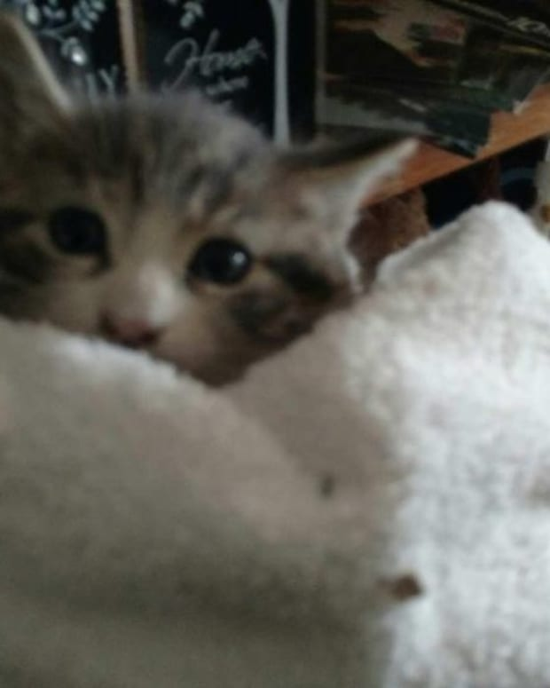 Firefighters Rescue Kitten From Inside Wall (Photos) Promo Image
