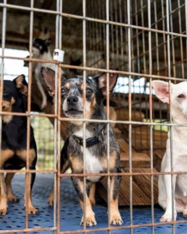 Puppy Mill.