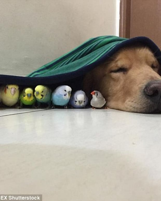 This Dog's Best Friends Are A Hamster And Eight Birds (Photos) Promo Image