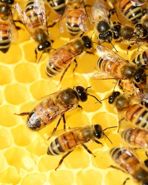 Honey Nut Cheerios Removes Iconic Bee From Its Box (Photo) Promo Image