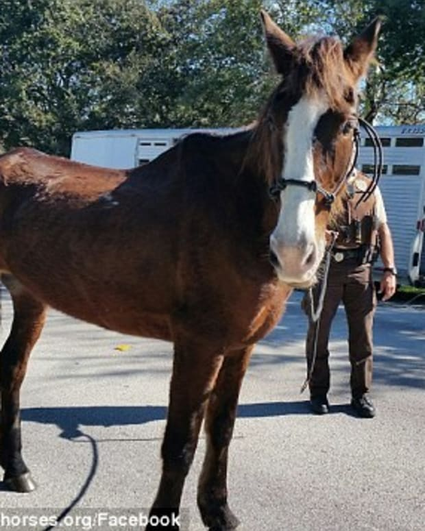 Man Arrested After Riding Horse 700 Miles Promo Image