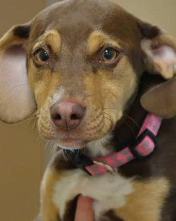 Abused Shelter Dog Finds Freezing, Naked Little Girl In Ditch Promo Image