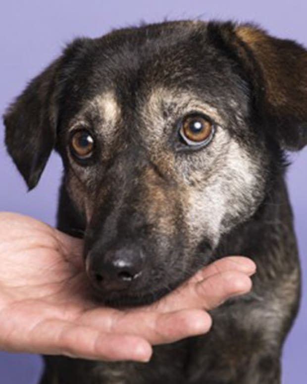 Dog Saved From Meat Trade Rescued Again In NYC Blizzard Promo Image