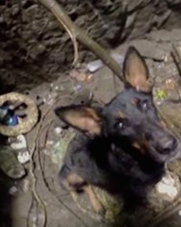 Puppy Stuck In Well Cries When Rescuers Arrive (Video) Promo Image