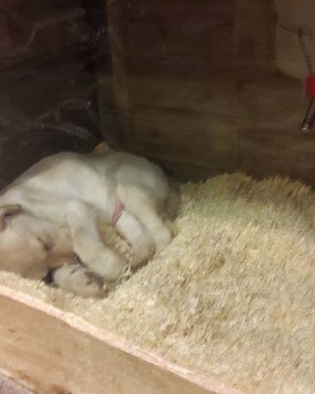 Caged Puppies Found Unresponsive In Ohio Pet Shop (Video) Promo Image