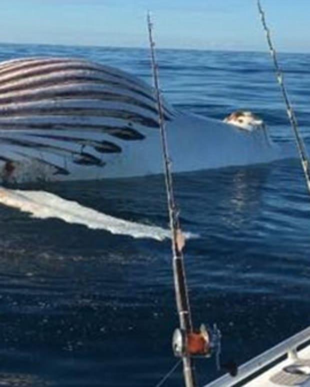 Fishermen Discover 'Alien' Object In Ocean (Photos) Promo Image