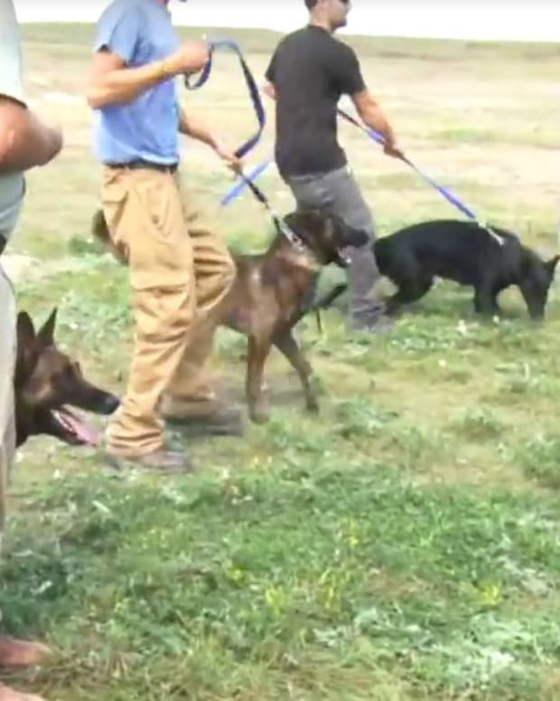 Pipeline Company Uses Dogs On Native Americans (Video) Promo Image