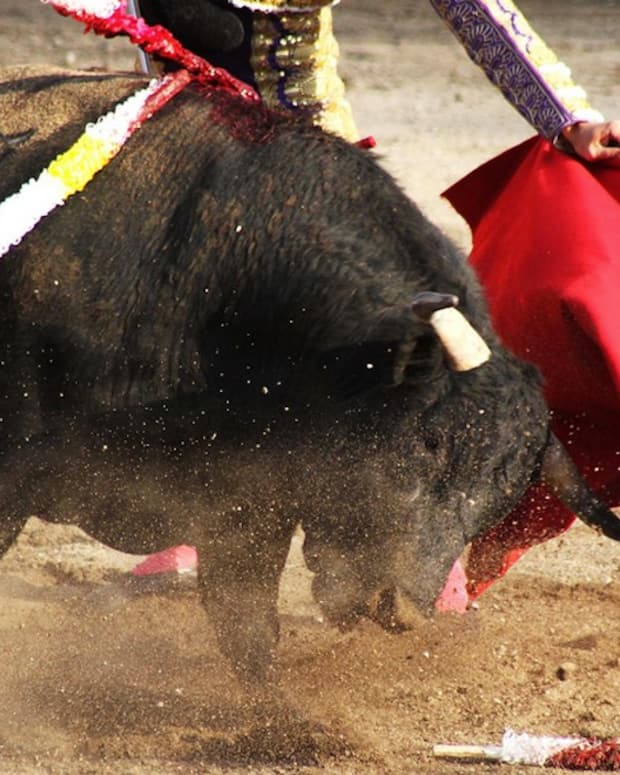 Bullfighter Suffers Rectal Damage After Being Gored Promo Image