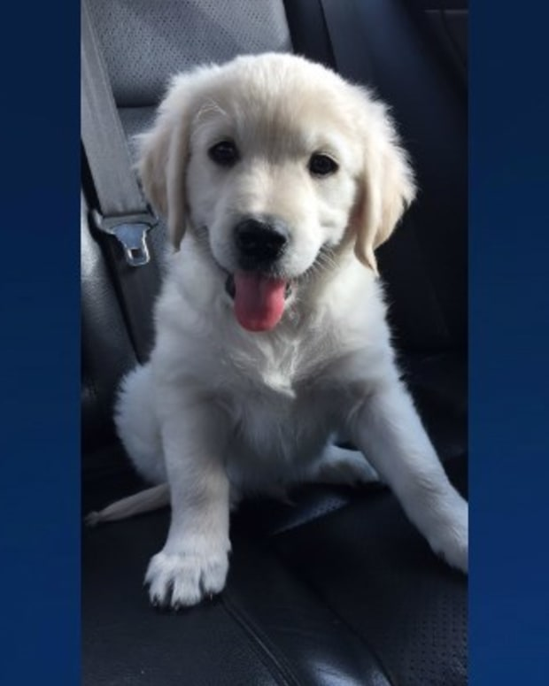 Puppy Stolen From Yard Raises 'Pet Flipping' Concerns Promo Image