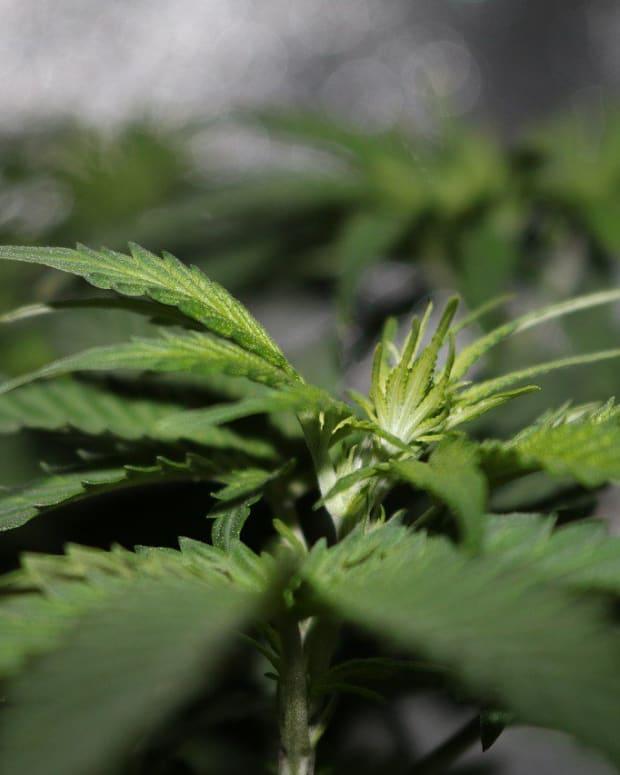 New Jersey May Legalize Marijuana Promo Image