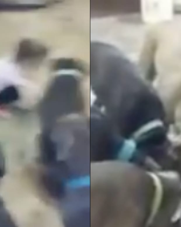 Parents Leave 4-Year-Old Girl With Pack Of Pit Bulls, Pit Bulls Rush In And... (Video) Promo Image