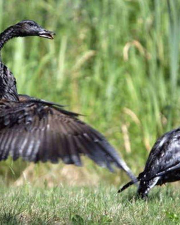 Keystone Oil Spill Highlights Risks Of XL Pipeline Promo Image