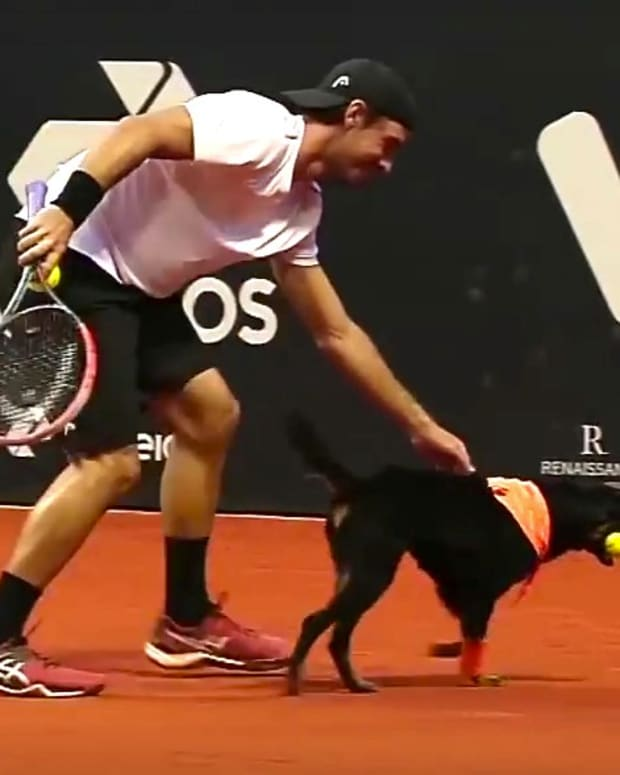 Shelter Dogs Retrieve Balls At Tennis Match (Video) Promo Image
