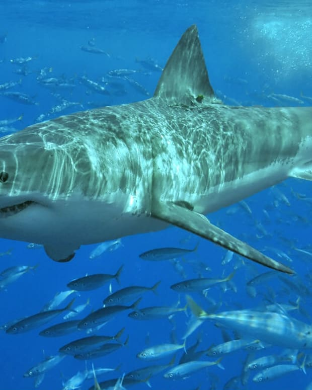 Shark Attack Leaves 13-Year-Old Boy Seriously Injured Promo Image