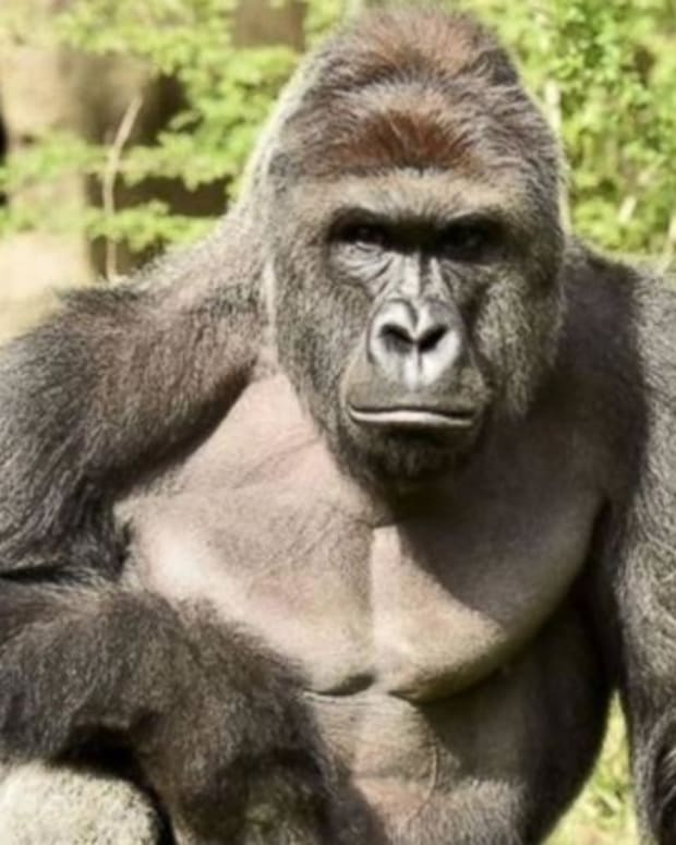 Mother Of Boy Who Fell Into Gorilla Pit Defends Herself Promo Image