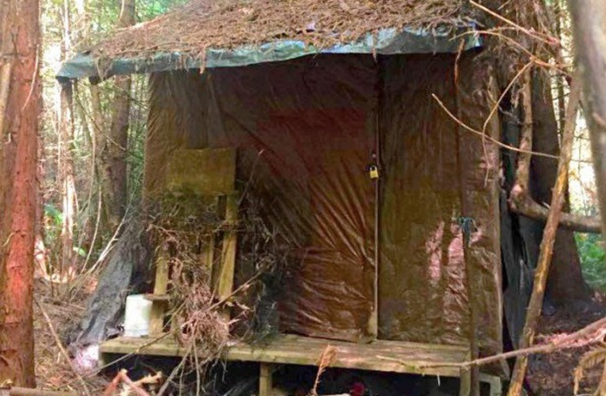 Forest Ranger Finds Mysterious Cabin In Woods Photos