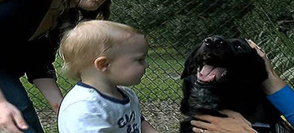 A pet sitter was caught on surveillance camera doing