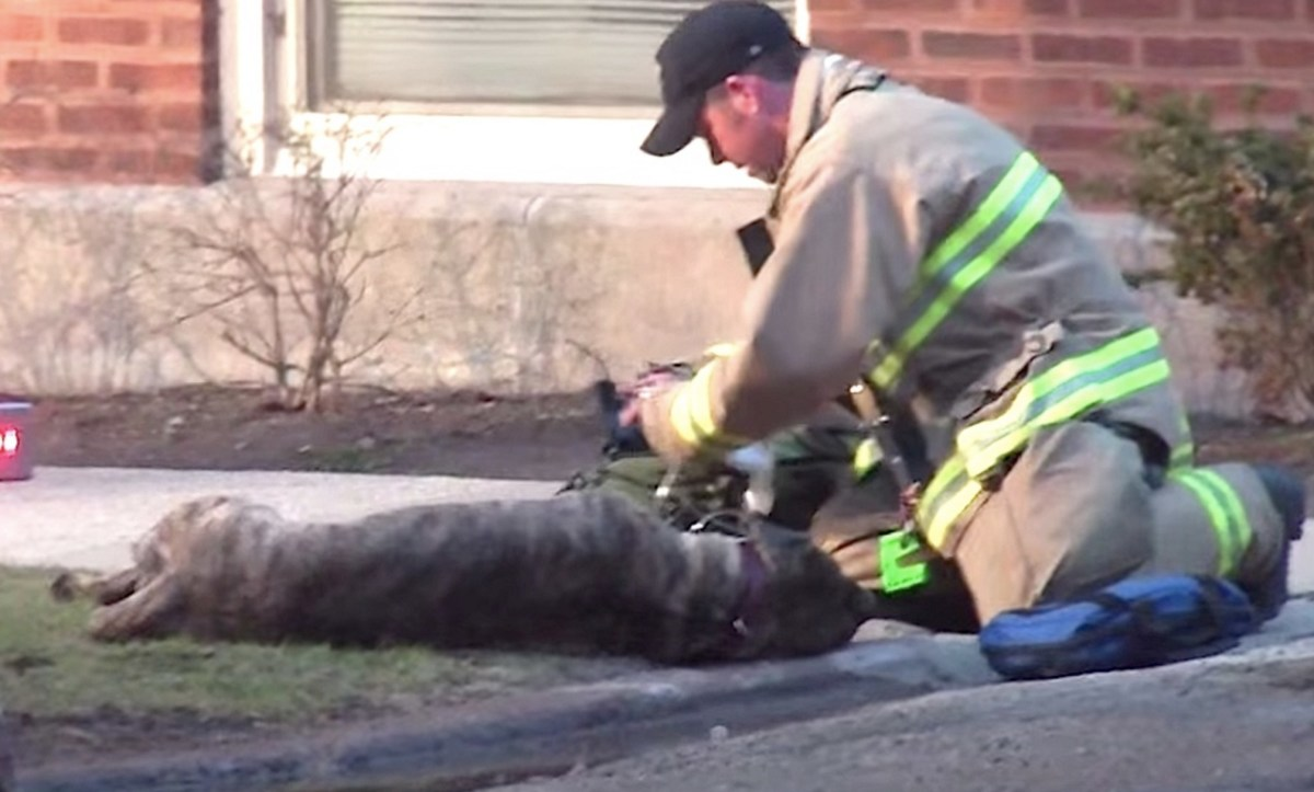 Firefighters Rescue A Dog From Burning Building (Video) - Opposing Views