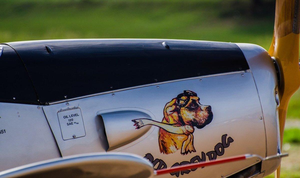 Dog Sole Survivor Of Plane Crash That Killed 3 People Promo Image