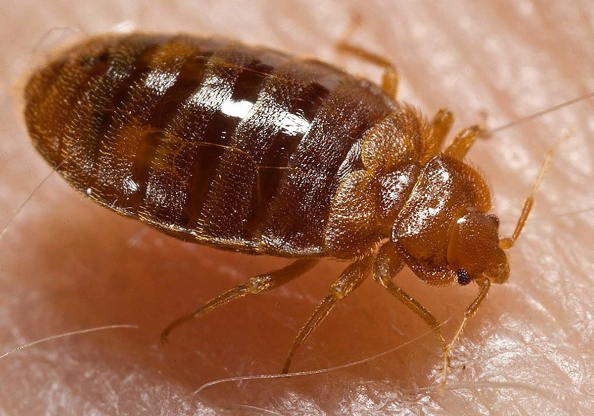 Woman Burns Down House While Trying To Kill Bed Bugs (Photos) Promo Image