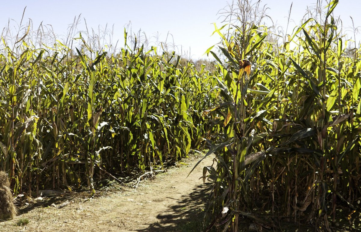 Mom Accidentally Leaves Son Behind In Corn Maze Promo Image
