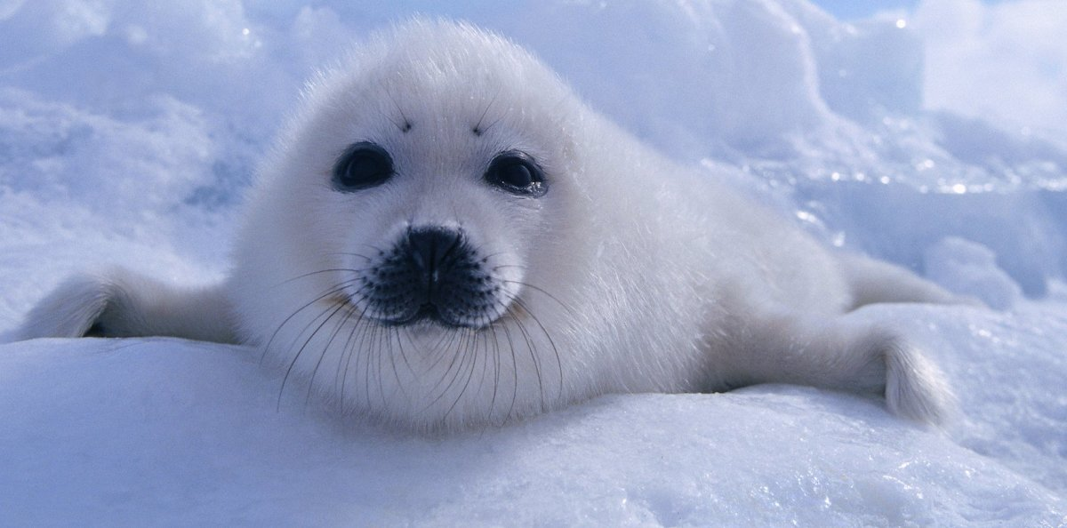 Plastic Pollution Discovered In Arctic Ocean (Photos) Promo Image