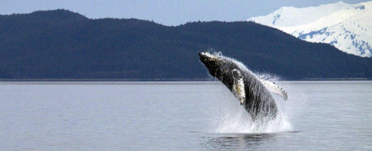 Mystery Creature Washes Ashore In Alaska (Photos) Promo Image