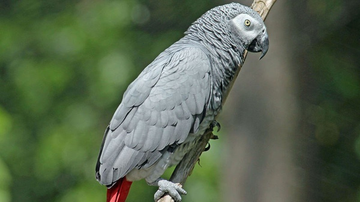 Wife Convicted Of Murdering Husband After Parrot Outed Her (Photos) Promo Image