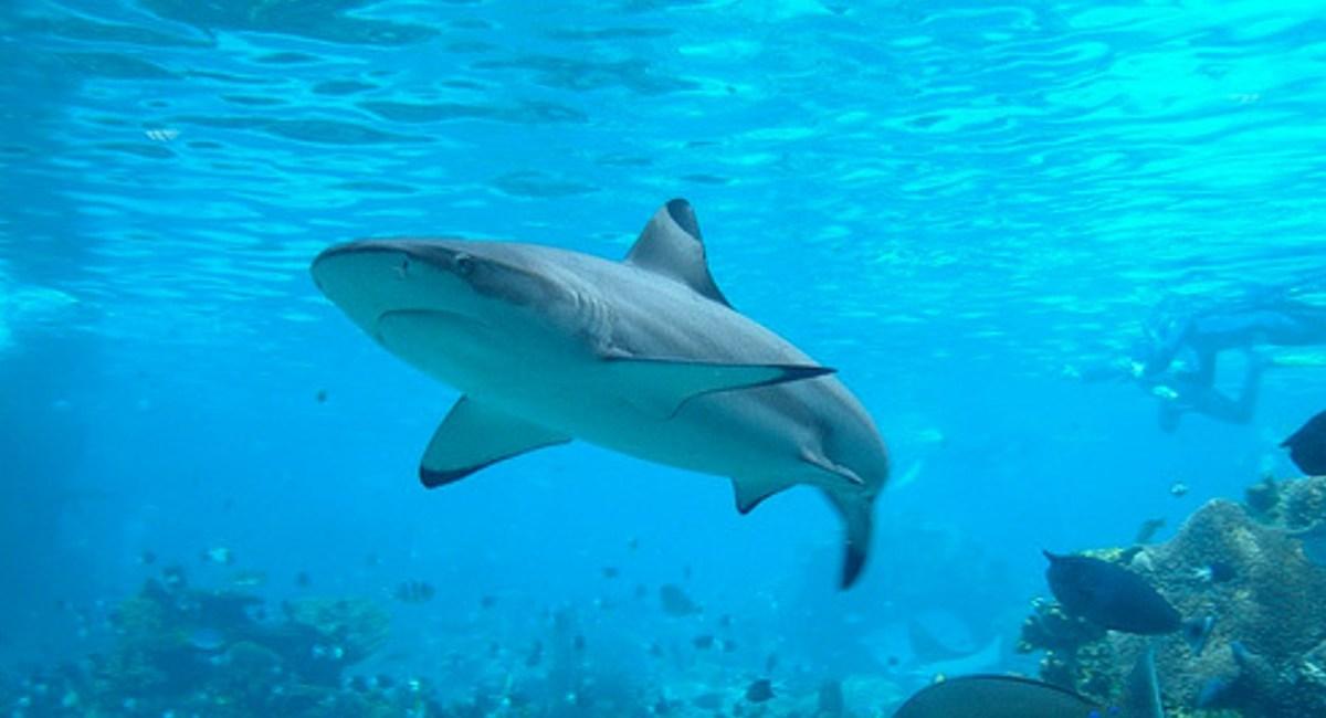 Men Drag Shark With Speedboat, Investigation Follows (Video) Promo Image