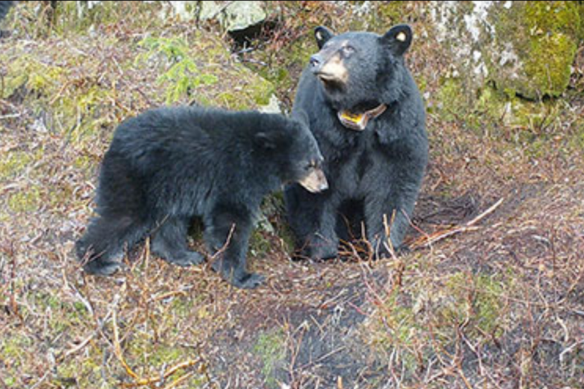bear-killer-1-768x512