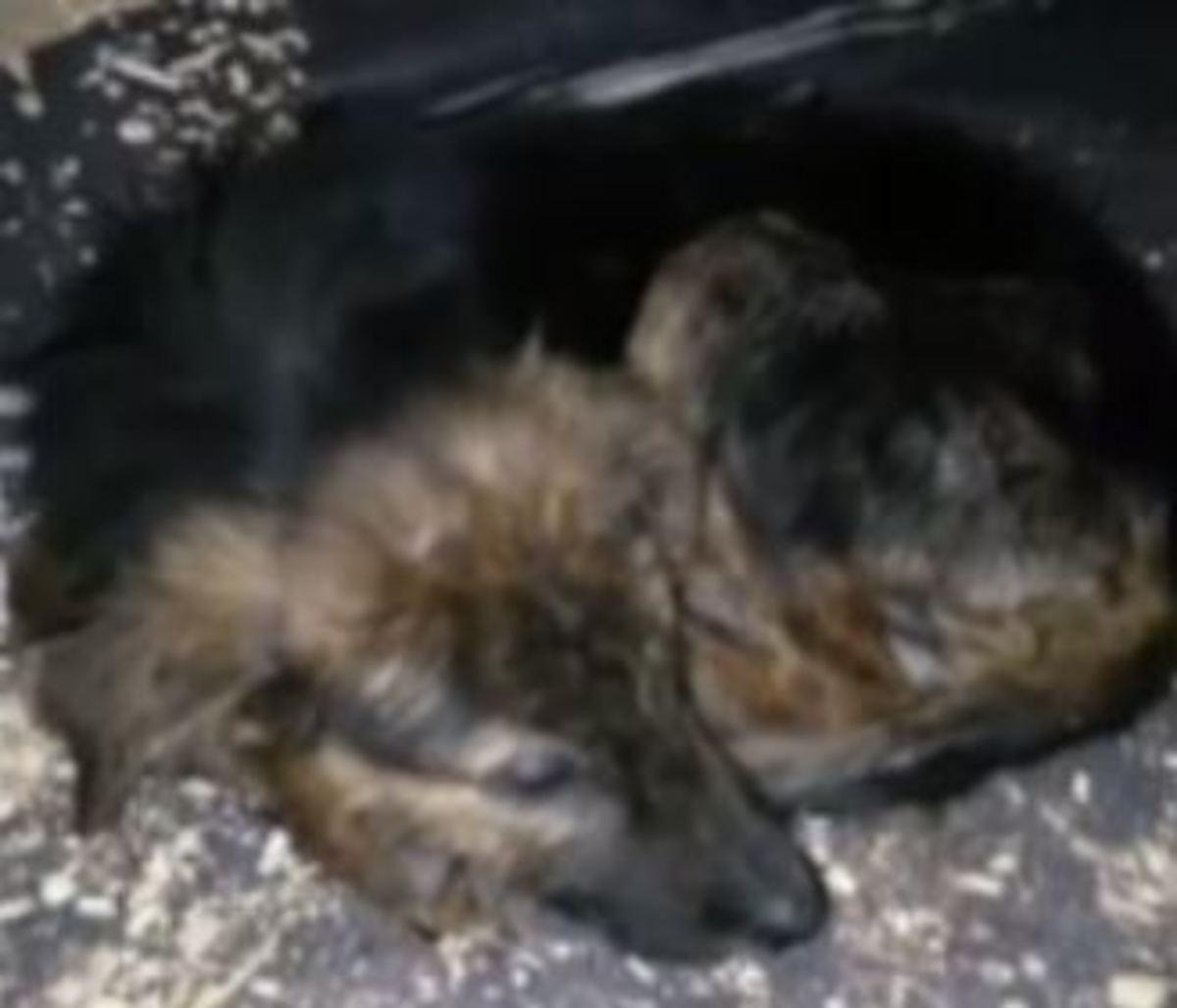 puppy-to-die-1