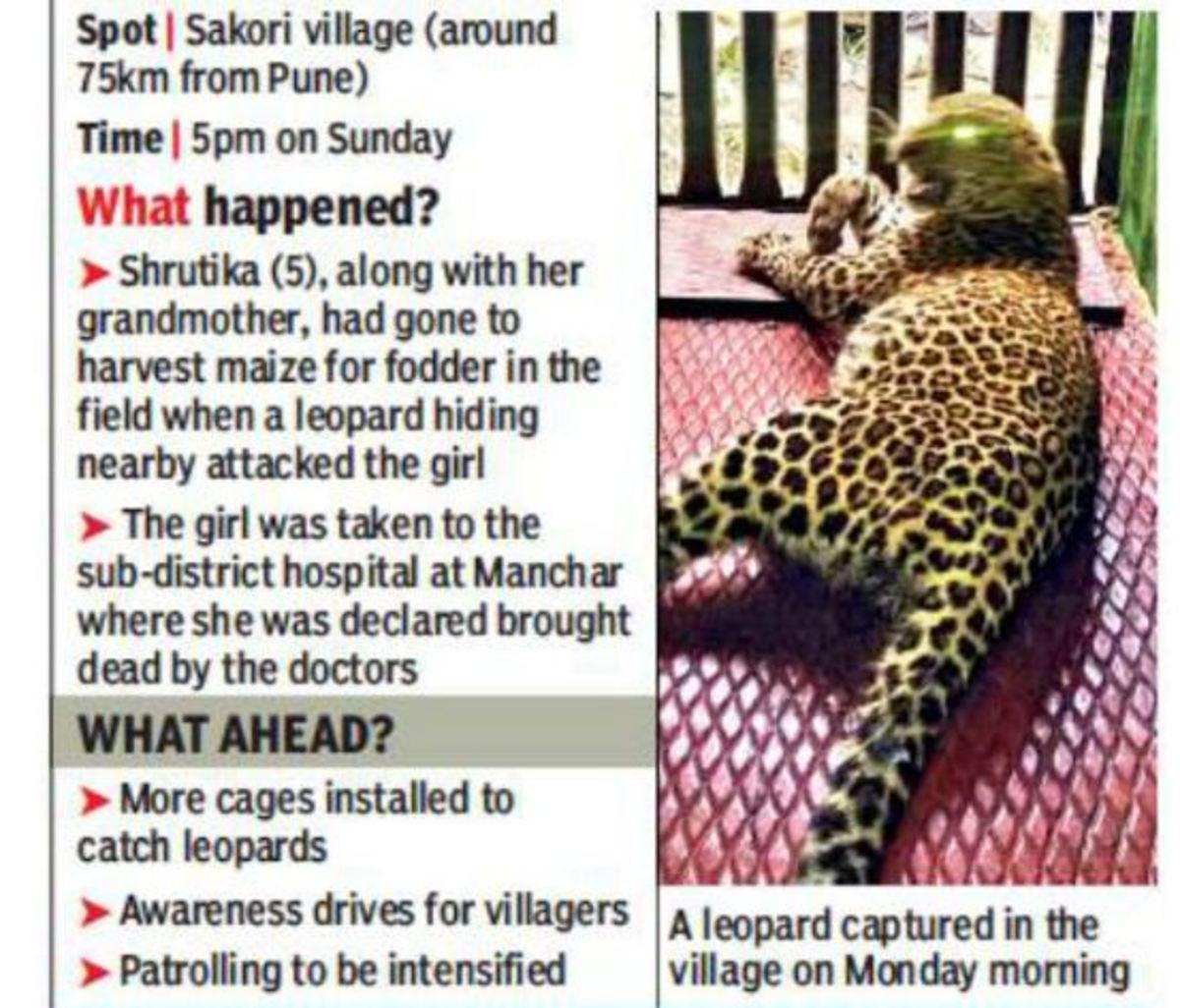 leopard-attack-3