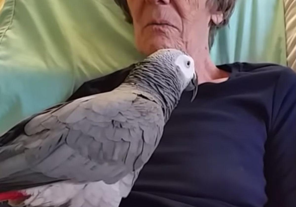 parrot-talks-1