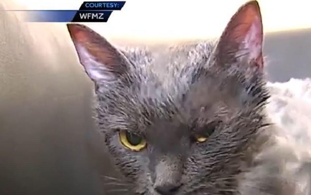 cat-garbage-3