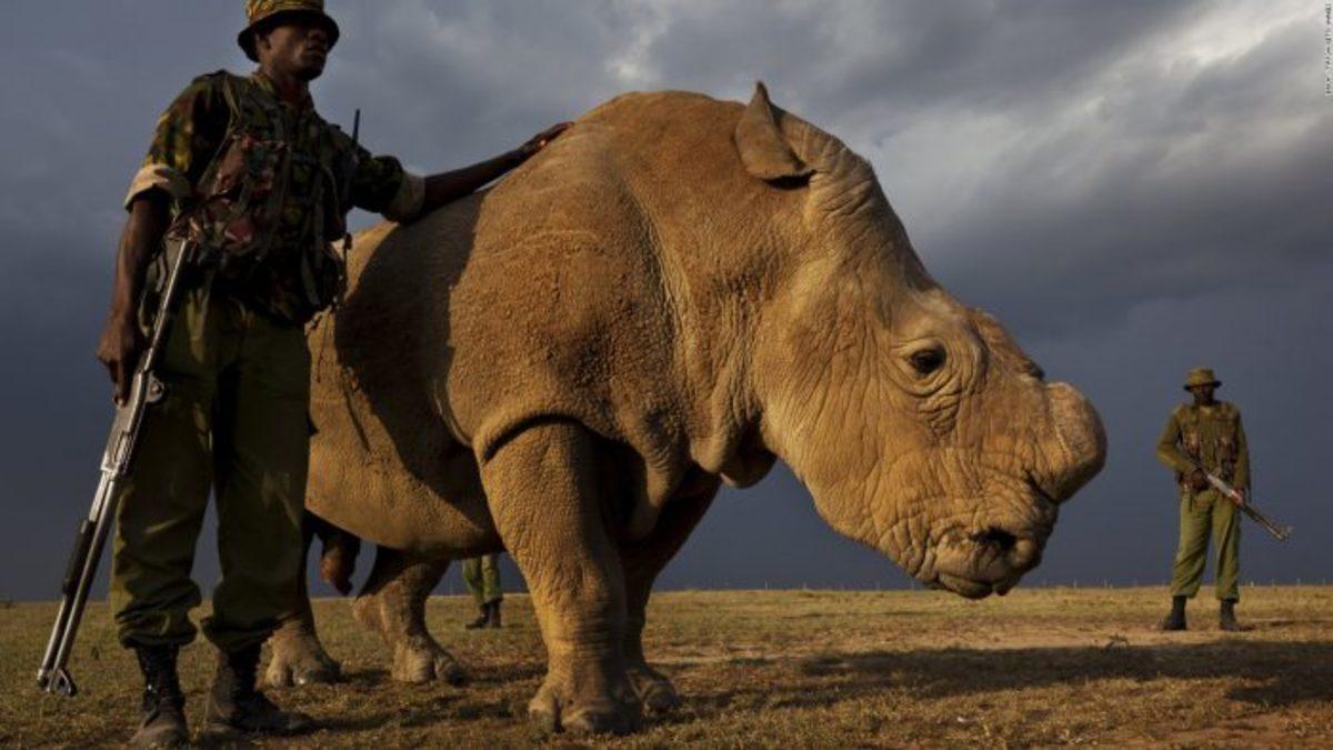 death-penalty-poachers-1-700x394