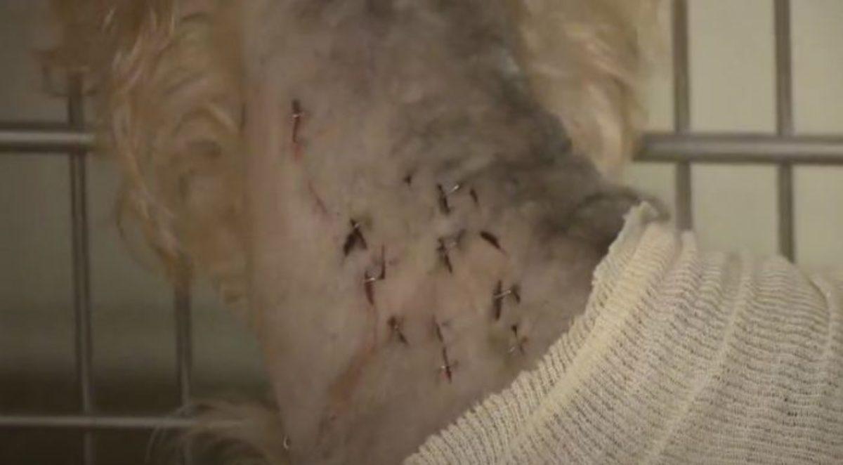 stabbed-dog-2-700x386