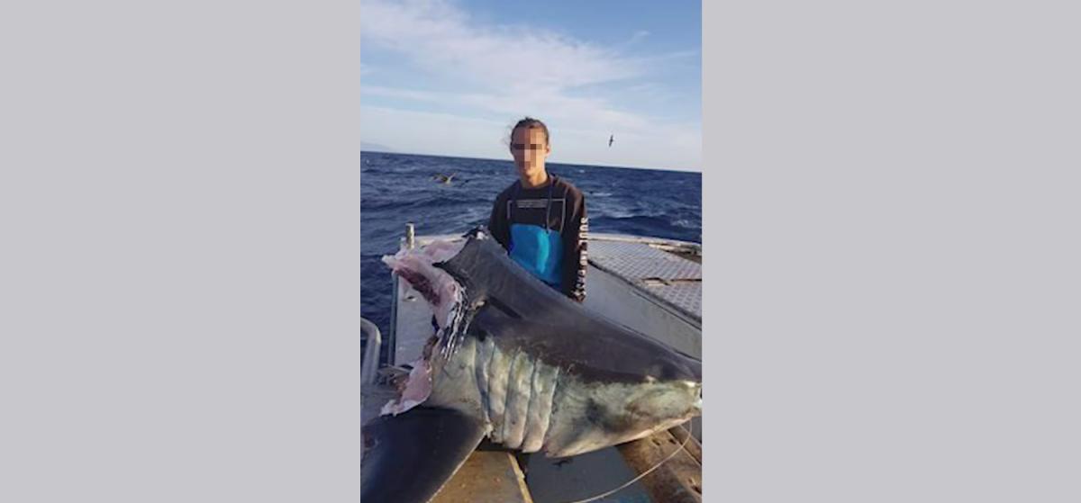 Shark-Article